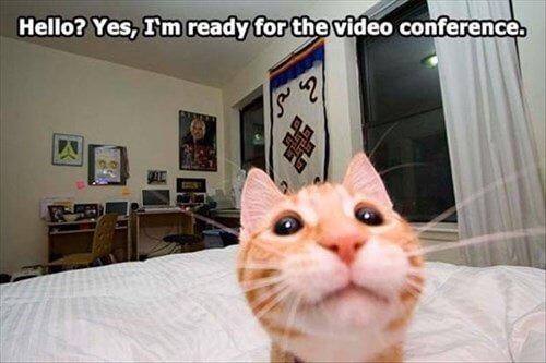Digital Transformation 90s Cat Video Conferencing